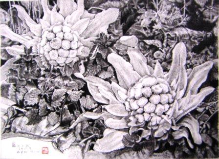 山田啓治鉛筆画展作品画像